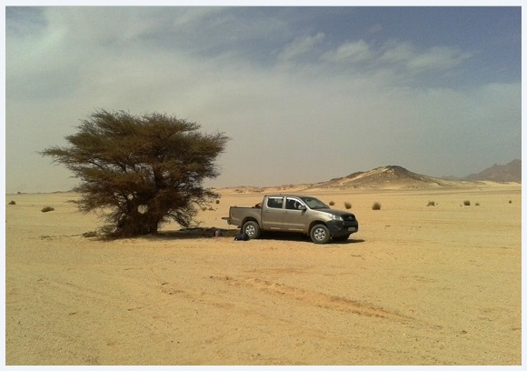 Algerian Sahara: a loneome tree, 4X4 and sand